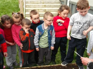 Planting 3 (Medium)